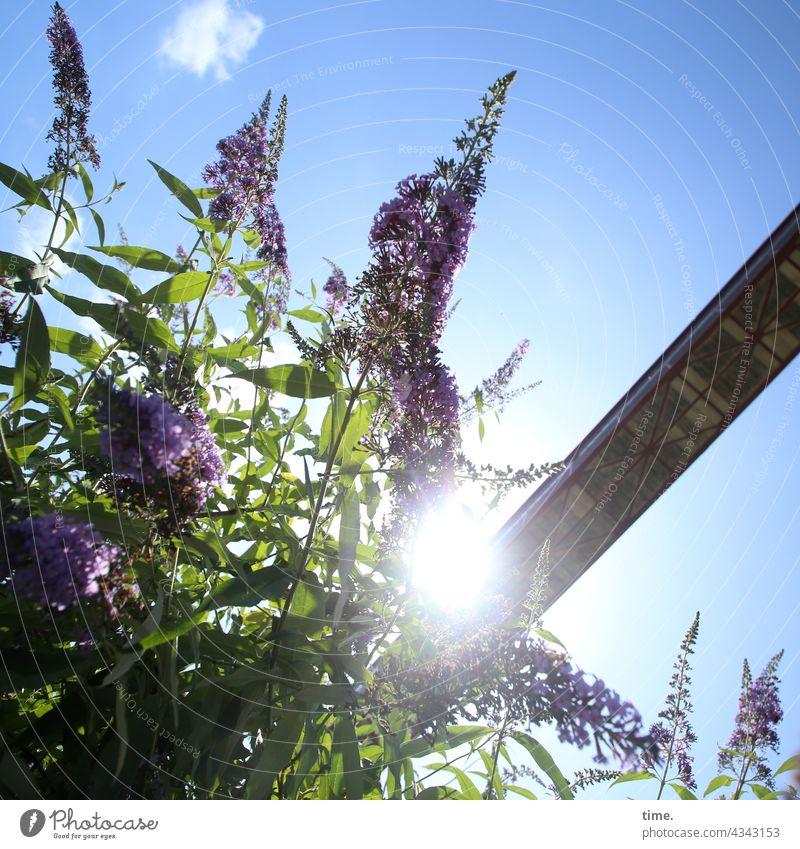 Zechengarten Schmetterlingsbaum Förderband Blume Blüte Neugier frech wachstum besonders stolz allegorie ast zweig blatt zuneigung annäherung prall füllig