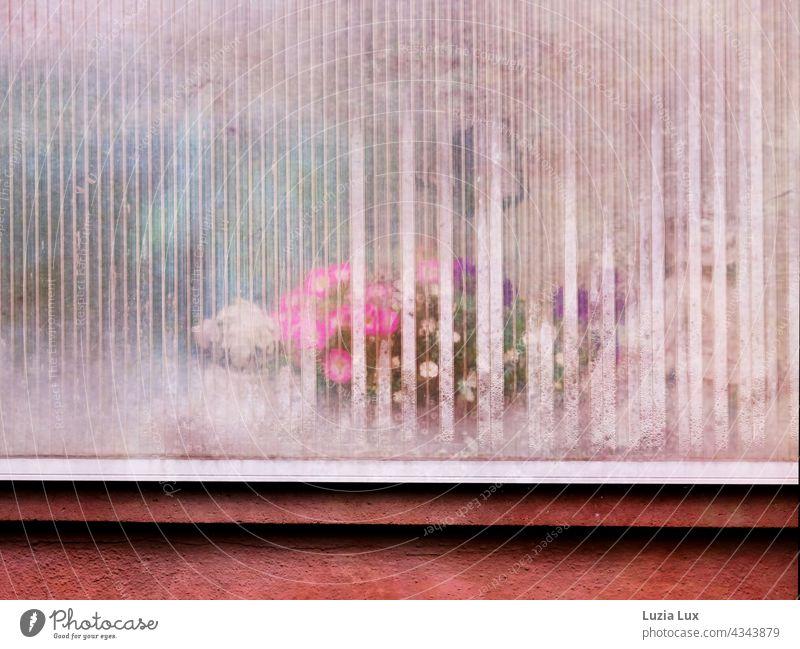 Bunte Blüten hinter einer milchigen Balkonverglasung und Kondenswasser zart durchscheinend bunt rosa weiß lila pink altmodisch Lichter Blume Sommer hübsch