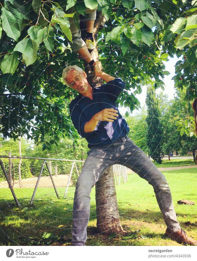 [PARKTOUR HH 2021] Mit denen ist gut Kirschen essen Kirschbaum Garten Räuberleiter Spass Dieb Sommer Kraft Mann grün breitbeinig Ernte Natur Jeans Baum