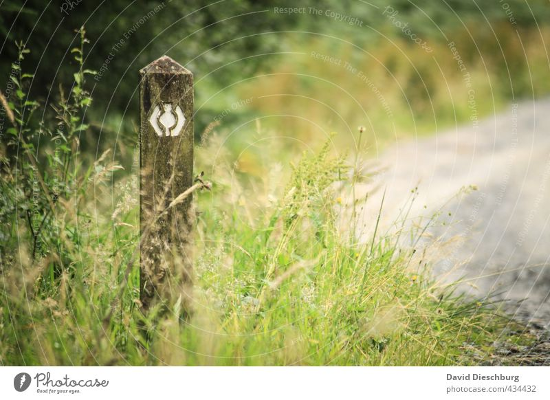 West Highland Way Natur Ferien & Urlaub & Reisen grün weiß Pflanze Sommer Wald Ferne Gras Wege & Pfade Freiheit grau braun Schilder & Markierungen wandern