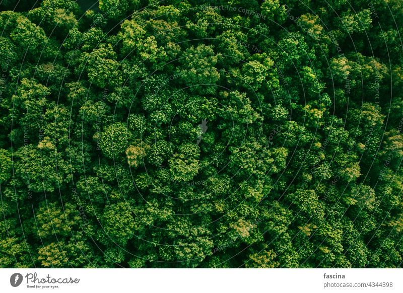 Sommer im Laubwald Luftaufnahme von oben Wald Antenne Park Bäume grün laubabwerfend Natur natürlich Top Baumkronen Textur Landschaft Abend wolkig Umwelt Wälder