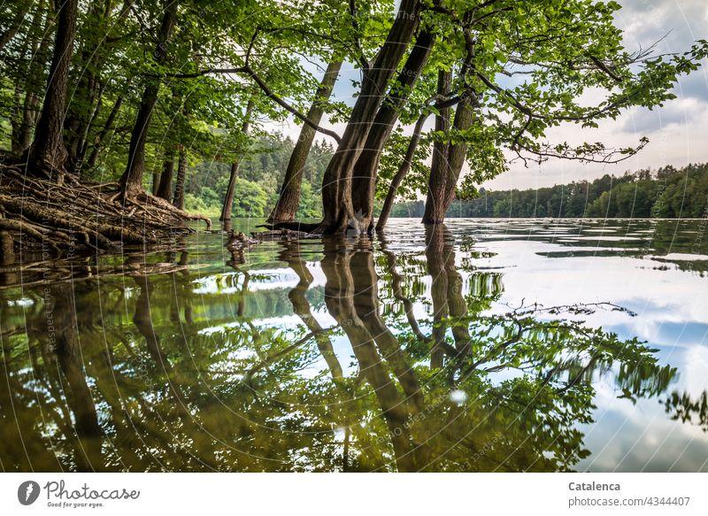 Wasserstand einer Talsperre Natur See Pflanze Baum Buche Blätter Ufer Überschwemmung Hochwasser Wald Spiegelung Reflexion Wurzeln Himmel Wolken Pegelstand Tag