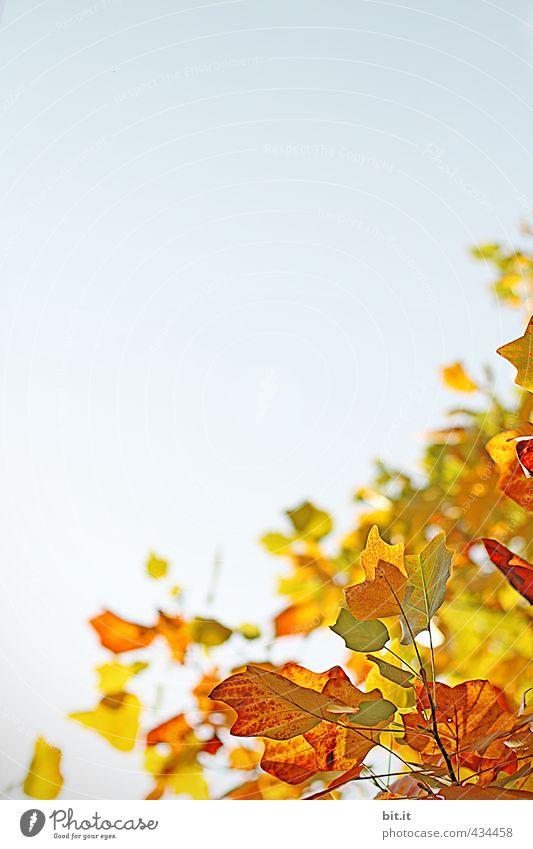 Herbstquartal Umwelt Natur Landschaft Pflanze Luft Himmel Wolkenloser Himmel Klima Schönes Wetter Garten Park Wald mehrfarbig gelb gold rot Stimmung