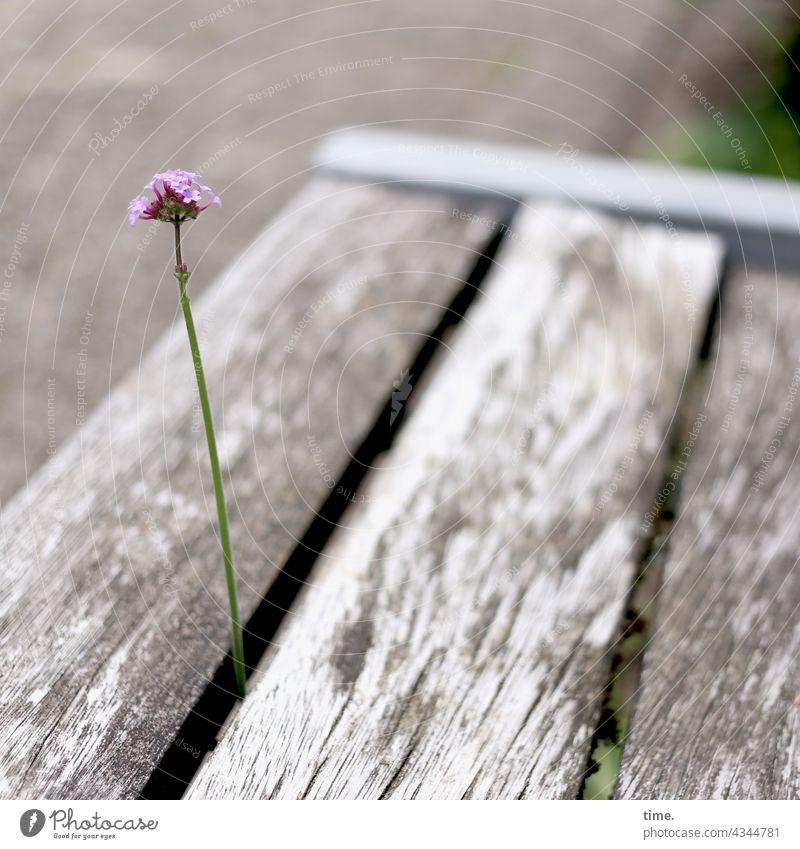 Luft nach oben Blume Blüte Sitzbank Ritze Neugier frech wachstum Lücke kreativ besonders ausbrechen ausbruch stolz allegorie parkbank