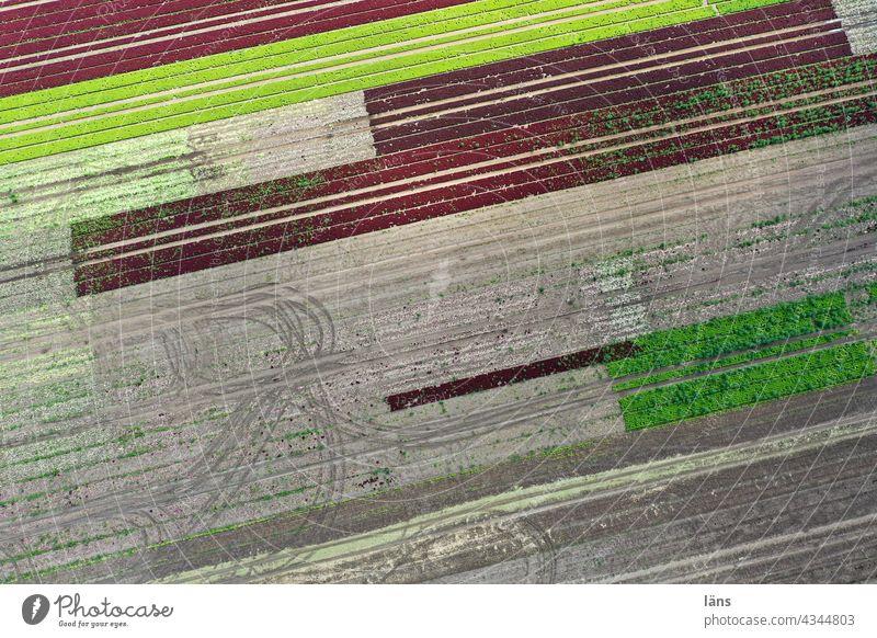 Salatanbau Landwirtschaft acker spuren linien Nahrungsmittel Grün Drohnenaufnahme Luftbild Traktorspuren aufbringen