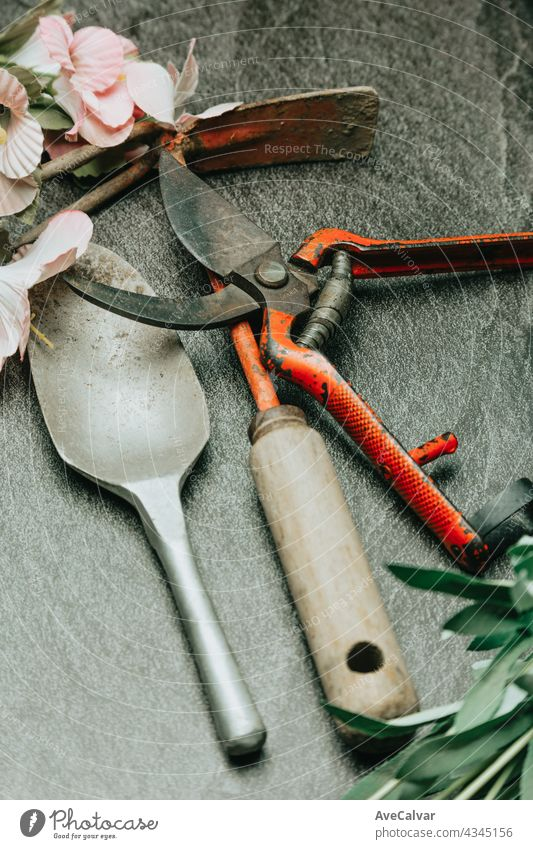 Schöne Gartenblumen und Gartengeräte auf shabby chic Hintergrund Pflanze Gartenarbeit Werkzeug Konzept vereinzelt sehr wenige Gerät hoch oben Hobby gelb