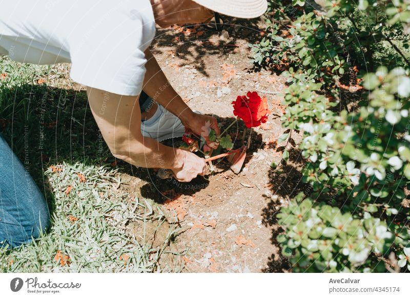 Hand wachsen Samen von Gemüse auf Aussaat Erde im Garten Metapher Gartenarbeit, Landwirtschaft Konzept. Pflege Beteiligung Beginn umgebungsbedingt Wachstum