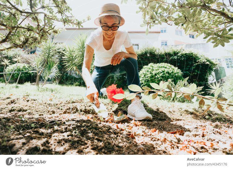 Gartenarbeit und Menschen Konzept - glückliche ältere Frau Pflanzung Blumen im Sommer Garten Großmutter Person in den Ruhestand getreten Senior reif Rentnerin