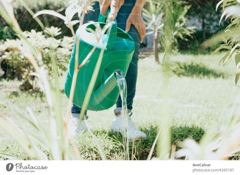 Gießkanne im Garten,Bewässerung des Gartens bei Sonnenuntergang,Gemüsegießkanne Hobby Person Gartenarbeit Mann Wachstum Hinterhof Pflege Gärtner Frau jung