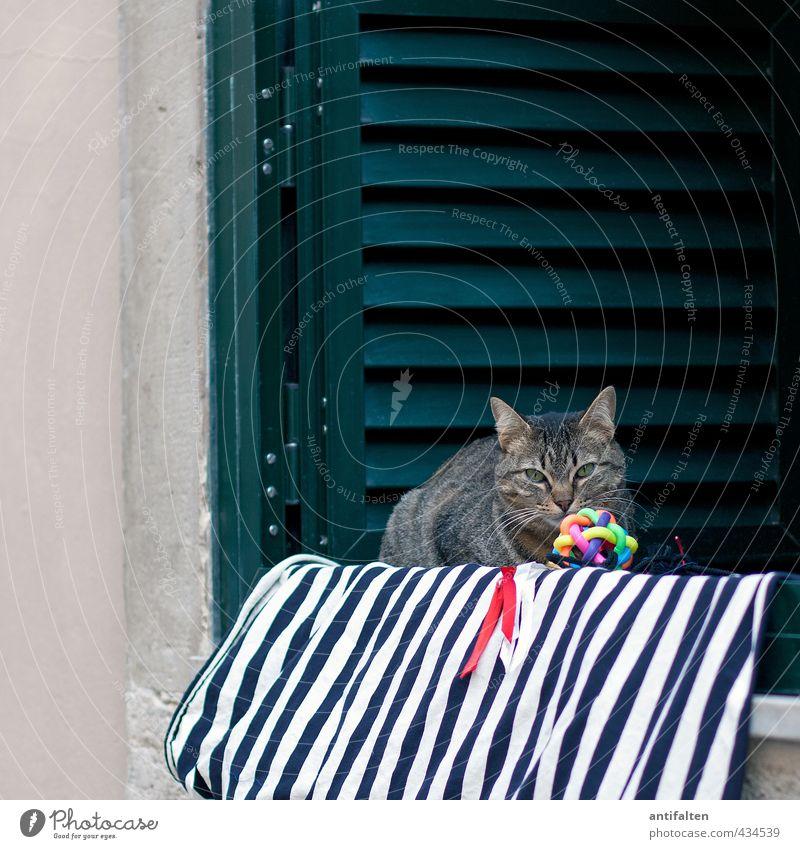 Lissabonner Katze II Stadt schön grün weiß Tier Fenster Wand Mauer natürlich Linie Fassade sitzen Dekoration & Verzierung beobachten Fell