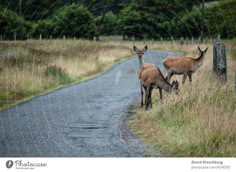 Wann kommt der nächste Bus? Natur blau grün Sommer Pflanze Tier gelb Straße Herbst Gras Frühling braun Verkehr Neugier Fell Tiergesicht