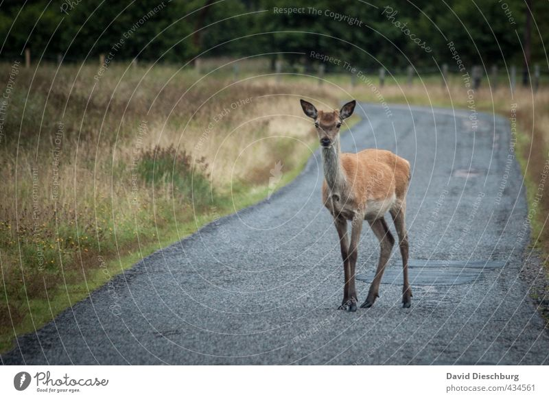 WHW-Wanderer Natur Ferien & Urlaub & Reisen blau grün Pflanze Tier gelb Straße Herbst Gras grau braun Wildtier stehen wandern bedrohlich