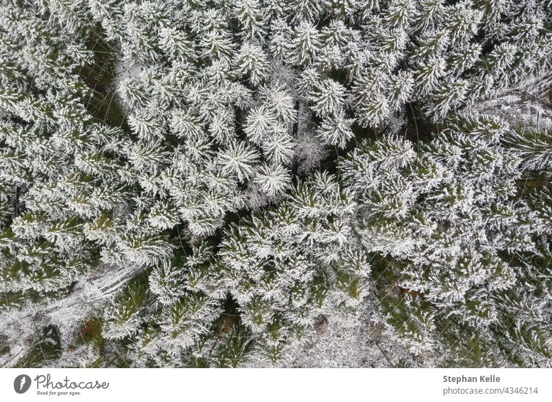 Winterwald als Top-Down-Aufnahme, gerade von oben der Blick auf die weißen Baumkronen, geteilt durch eine Landstraße in der diagonalen Mitte. Natur Wald