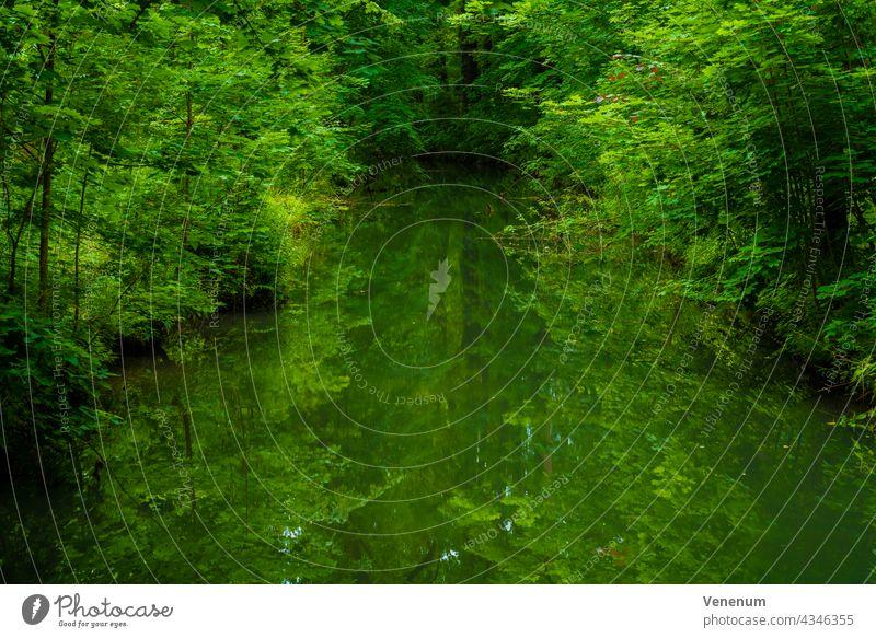 Breiter Fluss in einem Laubwald im Sommer, Wasserreflexionen auf der Wasseroberfläche Flüsse Wald Wälder Ast Niederlassungen grüne Lunge Blatt Blätter Gras