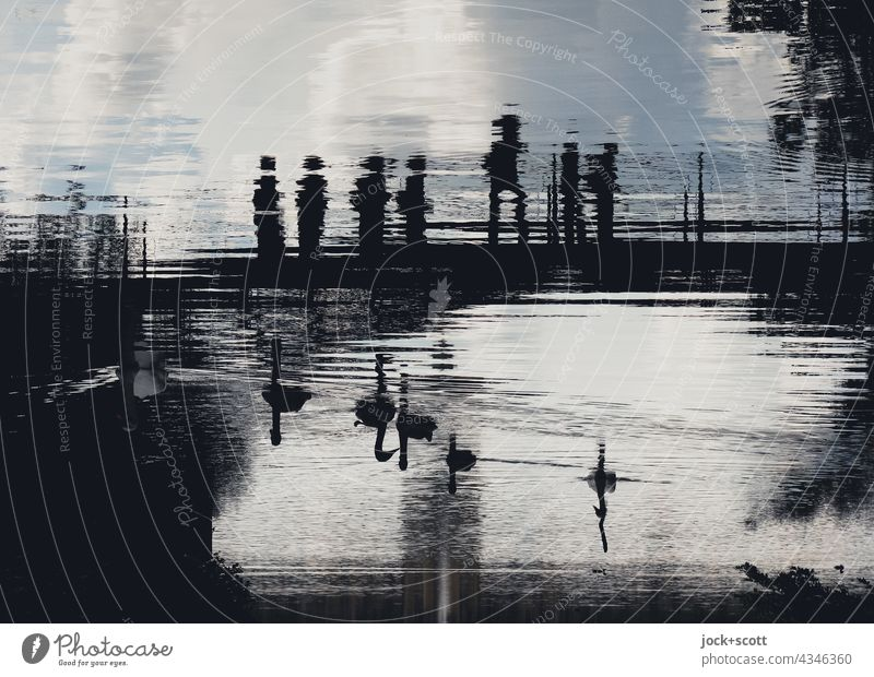 Schwanensee im Karpfenteich Teich abstrakt Illusion Phantasie Reflexion & Spiegelung Silhouette Brücke Surrealismus Schönes Wetter Wolken Wasseroberfläche