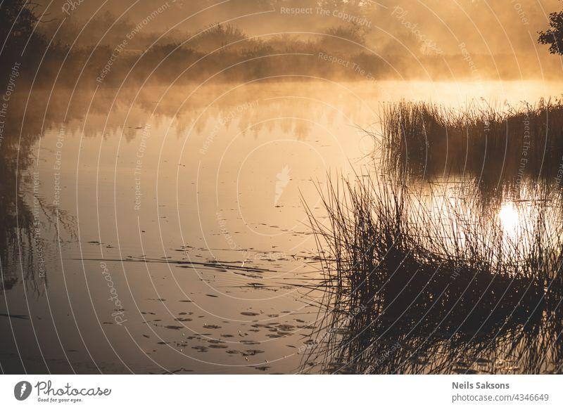 Sonne geht im kalten Oktobermorgen auf. Nebel über den Feldern und dem Fluss in Lettland. Schilf und entferntes Ufer spiegeln sich in der glatten Wasseroberfläche. Ruhiger Morgen ohne Wind. Wiese, Büsche und Wasser leuchten golden