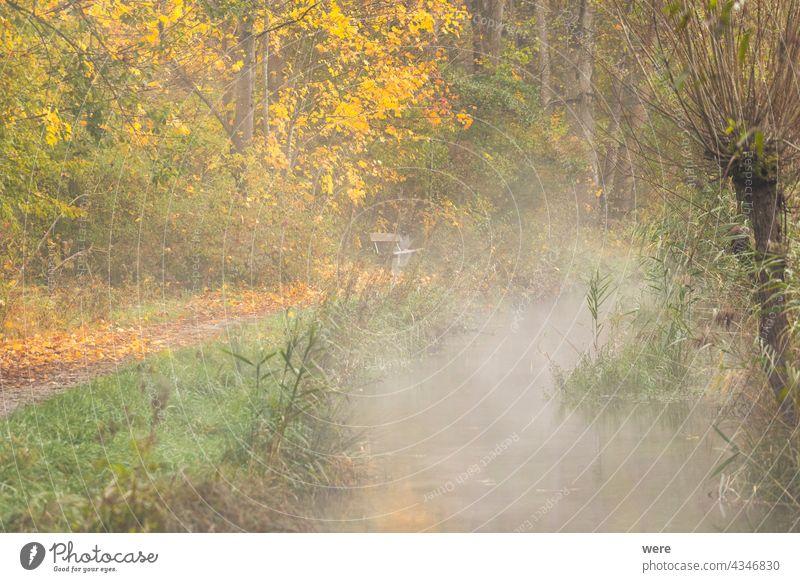Wald mit herbstlich gefärbten Blättern herbstlich gefärbte Blätter herbstlich bunt Niederlassungen Textfreiraum Landschaft Wiese Natur niemand im Freien Saison