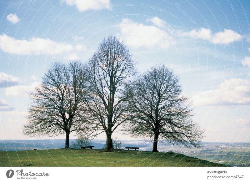 Bäume Baum Wiese Berge u. Gebirge Landschaft