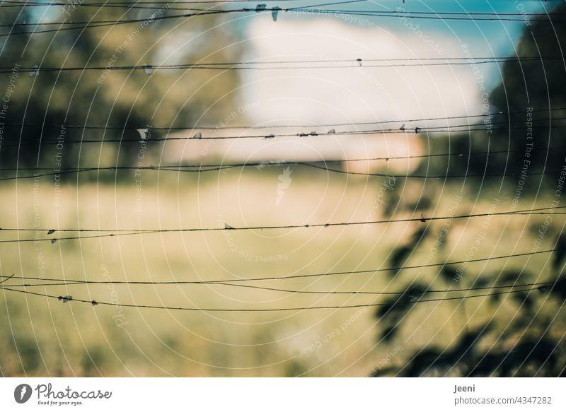 Lost Land Love | Metallfäden mit kleinen Glassplittern eines zerbrochenen Fensters lost places lostplace Fensterscheibe Zerbrochenes Fenster zerbrechlich