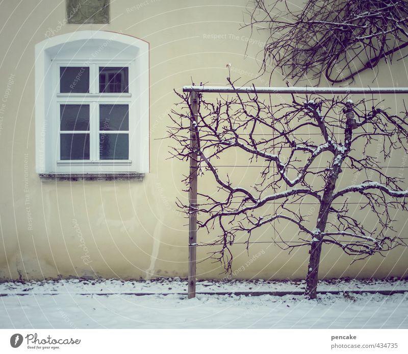 kalt und fenster Natur Baum Einsamkeit Winter dunkel Umwelt Fenster Wand Schnee Mauer Eis Park Fassade Design Ordnung