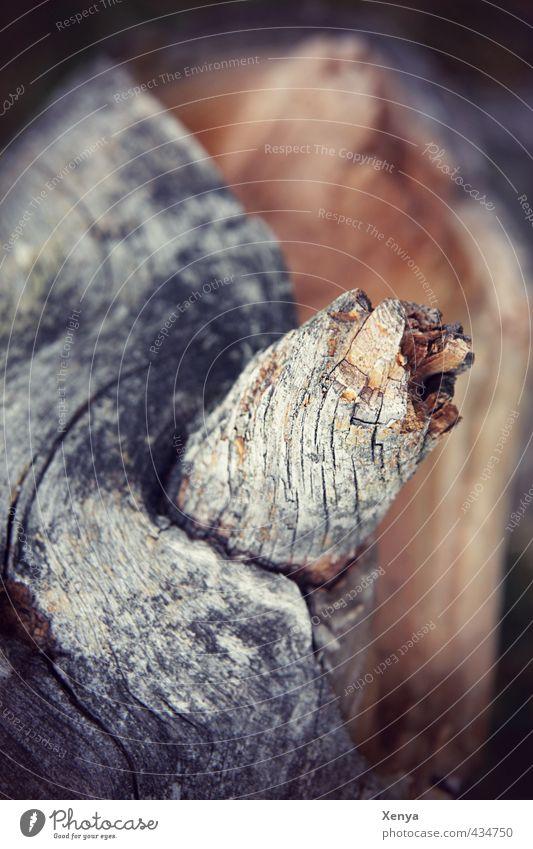 Holz Natur Baum alt braun grau gesplittert verwittert Strukturen & Formen Baumrinde Ast Tod Gedeckte Farben Außenaufnahme Nahaufnahme Menschenleer