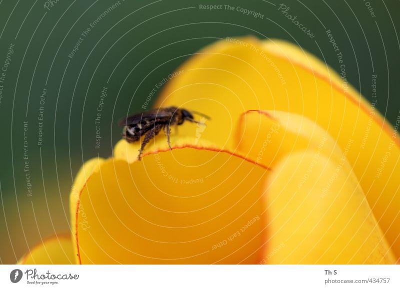 Biene Tier 1 Blühend natürlich Duft Natur Pflanze Farbfoto