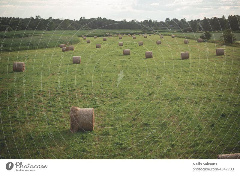 Leuchtend gelbe und goldene Heuhaufen auf landwirtschaftlichem Feld Stroh Heugarben Ernten rollen Ackerbau Natur Himmel im Freien Bauernhof Weizen Ballen blau