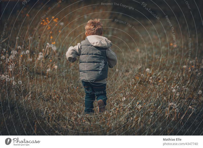 Kleiner June rennt über eine Wiese kleines Kind Lifestyle Freude Glück Freizeit & Hobby Spielen Ferien & Urlaub & Reisen Familie & Verwandtschaft Mensch Sommer