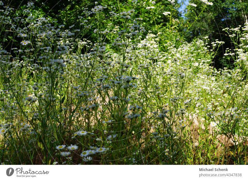 Gras und Bäume im Sonnenlicht Sonne,Gras, Bäume, Licht, Grün, Natur Himmel Wiese Landschaft Pflanze Außenaufnahme Umwelt Menschenleer