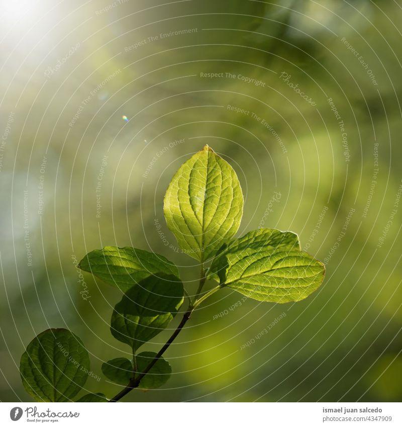 grüne Baumblätter im Frühjahr Niederlassungen Blätter Blatt Natur natürlich Laubwerk texturiert Hintergrund Schönheit Zerbrechlichkeit Frische Frühling Saison