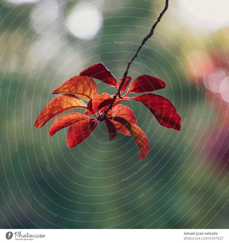 rote Baumblätter im Herbst Saison Niederlassungen Blätter Blatt Natur natürlich Laubwerk texturiert im Freien Hintergrund Schönheit Zerbrechlichkeit Frische