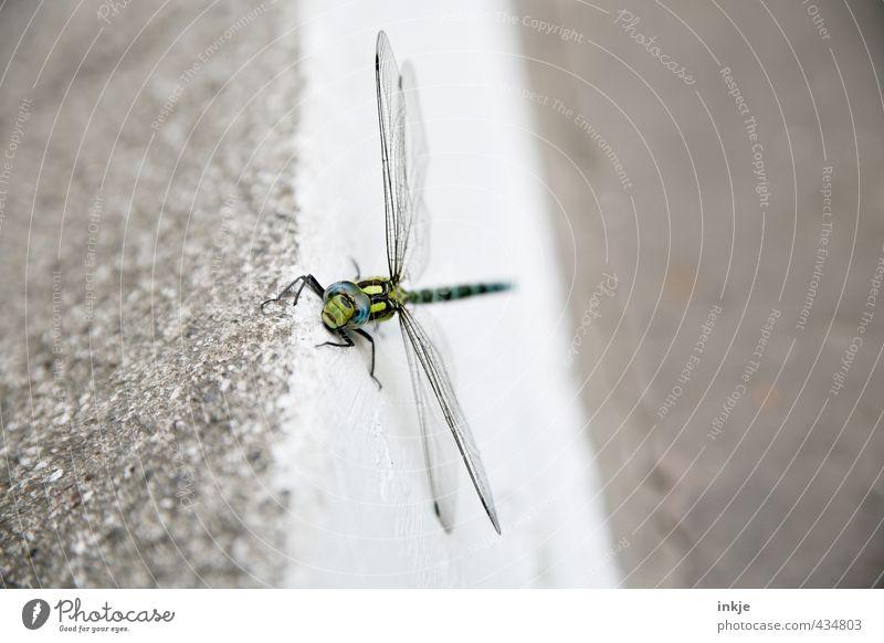 Entschuldigung...? Kennen Sie sich hier aus? Menschenleer Tier Tiergesicht Libelle 1 Stein Beton Blick klein lustig nah Gefühle Neugier Überraschung Sorge