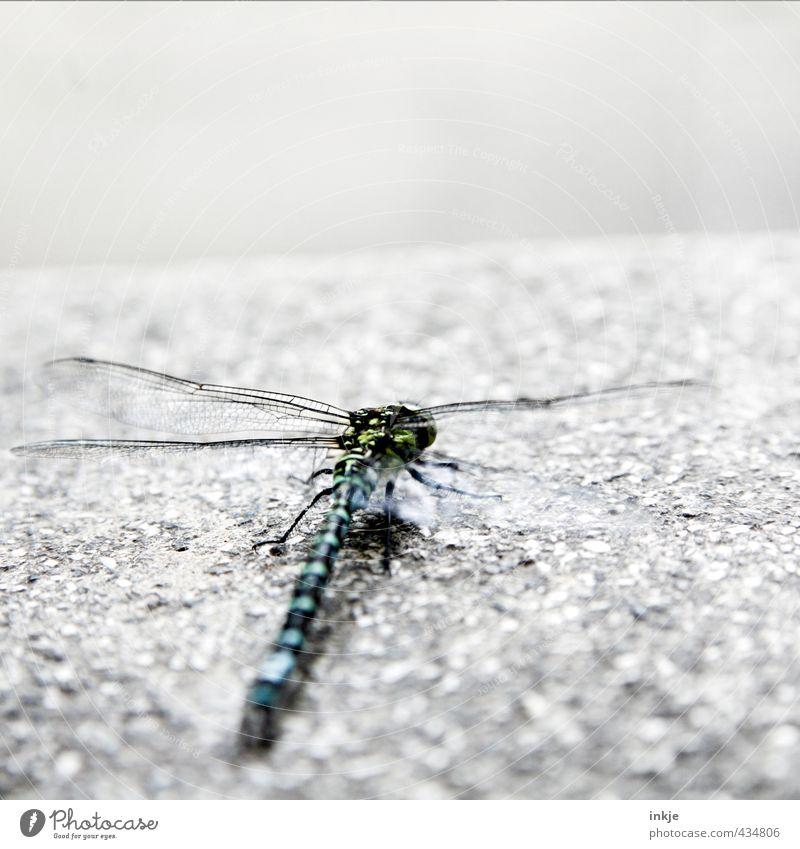 Startposition Menschenleer Tier Wildtier Libelle 1 Stein Beton hocken Blick kalt nah trist Gefühle Beginn Horizont Perspektive startbereit Farbfoto