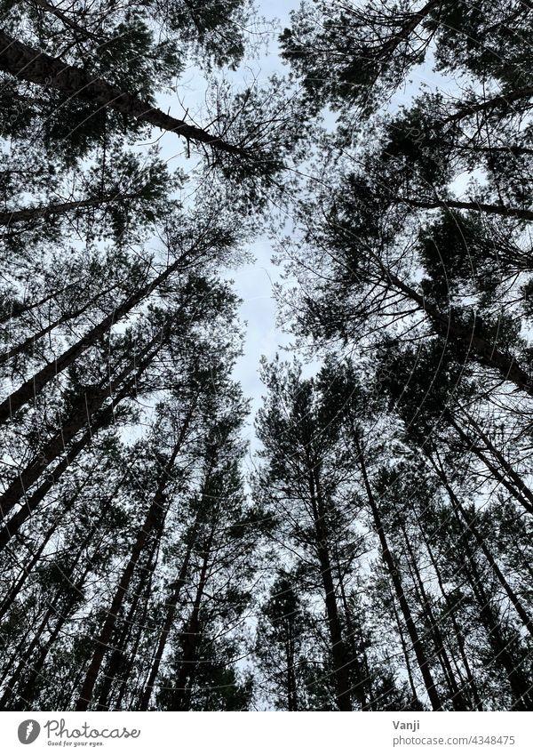 Wald von unten fotografiert Natur Baum grün Tag Farbfoto Außenaufnahme natürlich Licht Umwelt Menschenleer Blätterdach Baumstamm Baumkrone Wachstum hoch