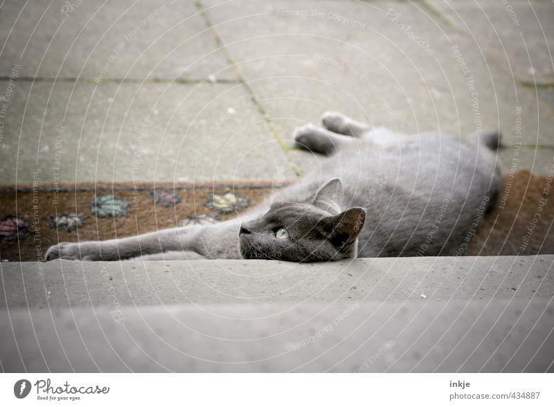home is where the heart is Menschenleer Treppe Terrasse Fußmatte Tier Haustier Katze Tiergesicht Hauskatze 1 Beton liegen Blick kuschlig Gefühle Stimmung