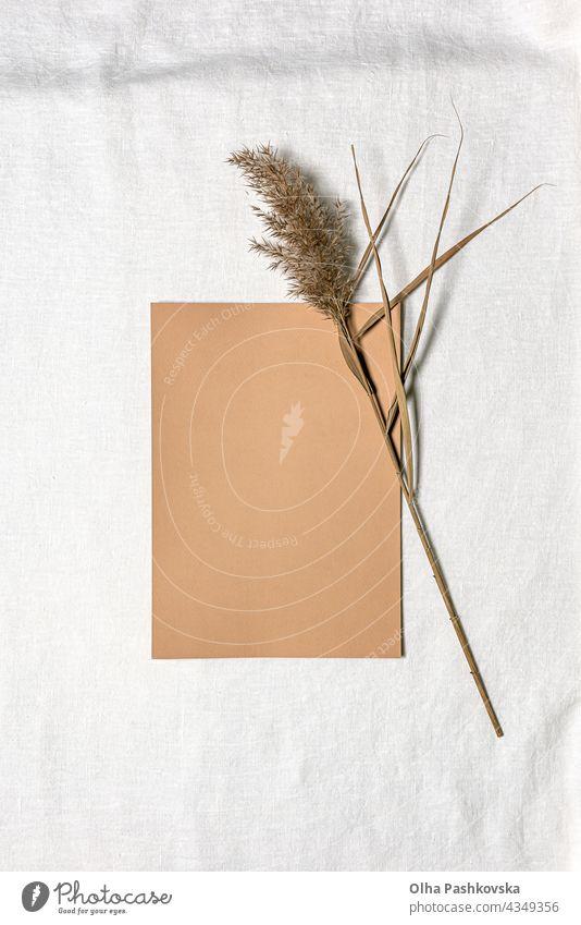 Papierbogen und getrocknete Schilfblüte auf weißem Leinen natürlich Dekoration & Verzierung taktil geblümt Stil Postkarte Textur Ast braun Flora organisch beige