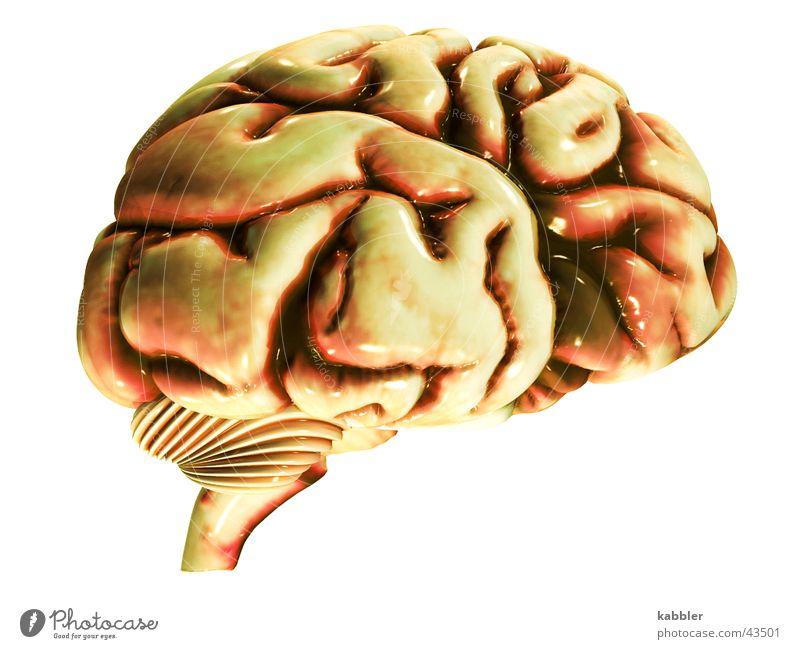 No brain no headache Mann Kopf Denken Kreis Fleisch Gedanke klug Erinnerung Gehirn u. Nerven Dachboden Logik