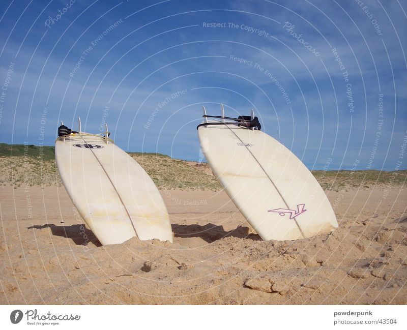 Beachlife Sonne Sommer Strand Sport Surfen Surfbrett