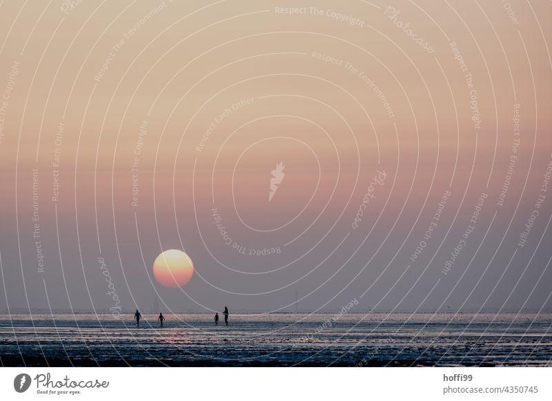 Sonnenuntergang im Wattenmeer - schön ruhig und entspannt Nordsee Wattwandern Gezeiten Sonnenaufgang Küste Sonnenlicht Strandleben maritim Wattwanderung einfach