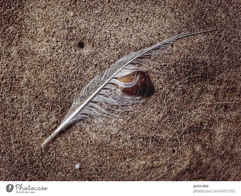 orakel Sand Küste Meer muschel umarmung Innigkeit liegen i ging Bedeutung schicksal bodenhaftung Wasser Ying-Yang Nordsee strandgut weisheit mirakel Feder