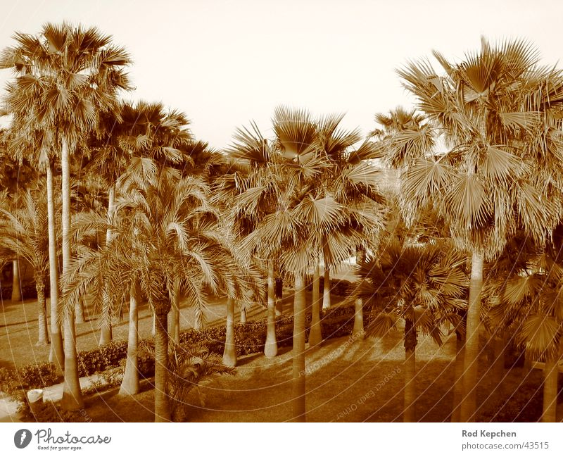 Summer Palms Palme Sommer Sonne Strand Meer Ferien & Urlaub & Reisen Baum Promenade Wasser Schwarzweißfoto