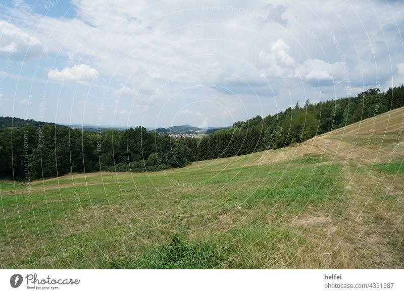 Grüne Wiese mit Wald und Bergen im Hintergrund bei blauen leicht bewölktem Himmel Wolken Landschaft Natur Gras Berge u. Gebirge grün Grünfläche Idylle