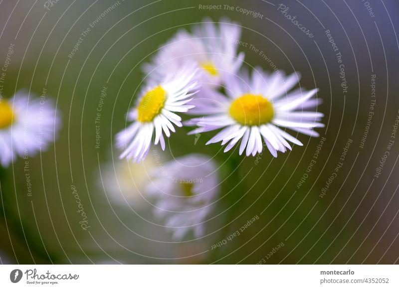 Berufskraut Wildpflanze Grünpflanze Pflanze Sommer Blume Natur Umwelt natürlich Außenaufnahme Nahaufnahme Licht Sonnenlicht klein frisch
