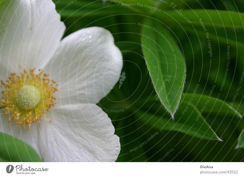 Anschnitt Pflanze Wassertropfen Blume Blatt gelb grün weiß flower leaves Farbfoto Außenaufnahme Menschenleer Tag Licht Schatten Kontrast Unschärfe