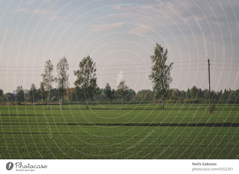 Linien auf dem Feld, Birken auf der Wiese, Frühlingslandschaft Sonnenlicht Infrastruktur Spannung Elektrizität Landschaft Sonnenuntergang Bauernhof Cloud
