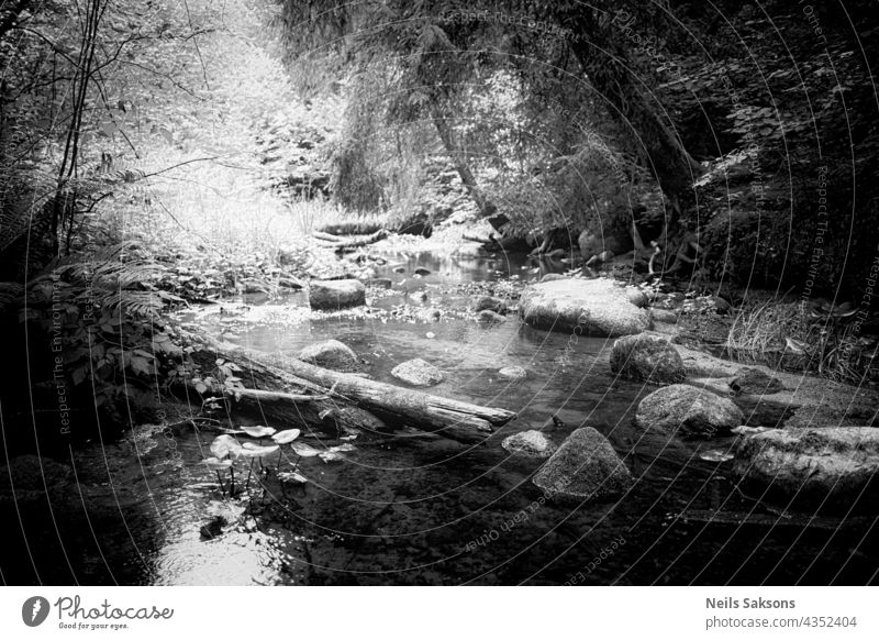 sonniger warmer Sommer mitten am Tag. Steine und Baumstämme in einem kleinen Fluss. Hartes Licht monochrom Felsbrocken Tourismus idyllisch Felsen Natur