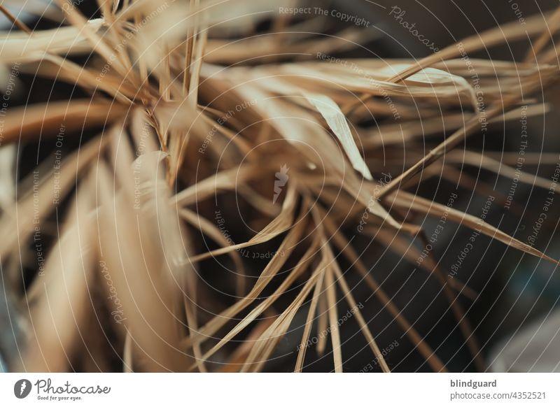 Chamaedorea elegans pflegeleicht vertrocknet tot trocken Blätter Blatt Unschärfe braun abgestorben trockenheit Wüste Wedel Palmwedel Struktur Hintergrund