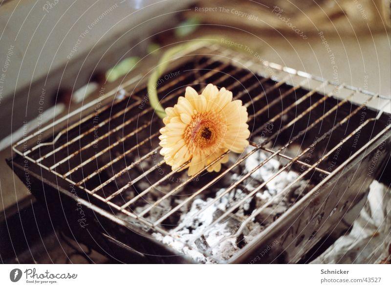 Kommen und Gehen Grill Gerbera Blume Pflanze Dinge Natur kochen & garen