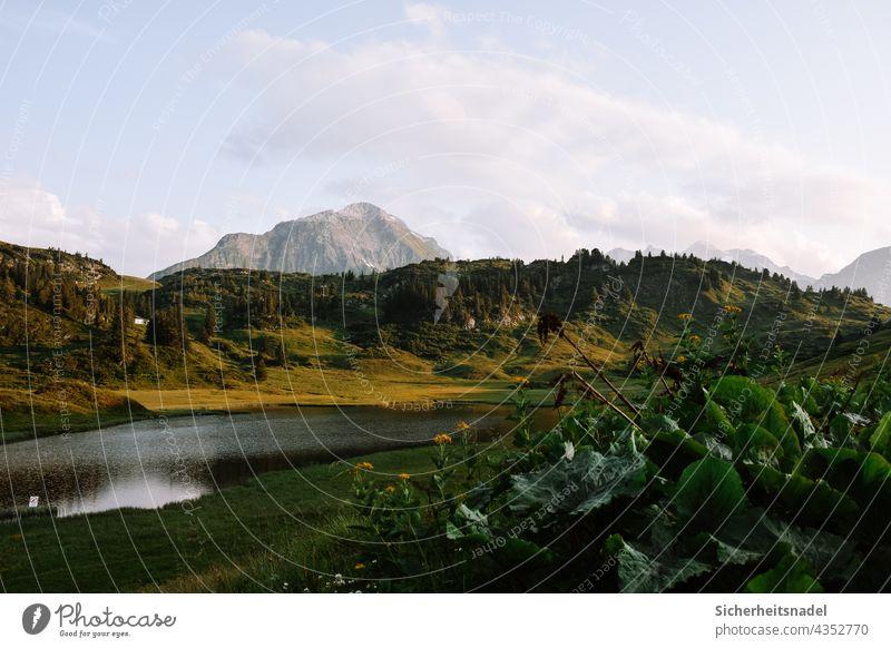 Kalbelesee See Berge u. Gebirge Alpen Österreich Landschaft Natur Außenaufnahme Schönes Wetter Menschenleer Sommer ruhig Wasser Erholung Idylle grün Abend