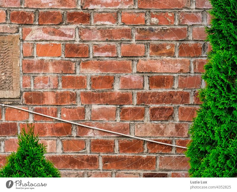 Immergrün und alte Kabel vor einer Backsteinmauer Mauer Backsteinwand Backsteinfassade rot Elektrik altmodisch Form immergrün Wand Fassade Außenaufnahme